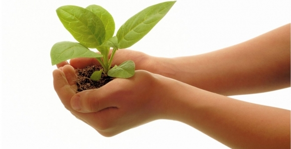 plantinhand