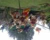 Teddy parachute jump