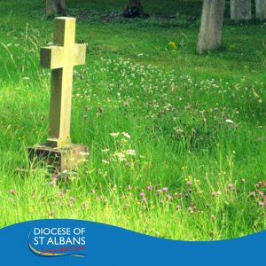 St Albans Diocese's Living Churchyards Day