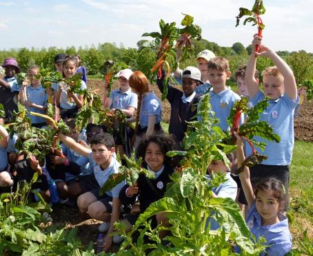 School children harvesting rainbow chard